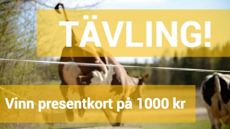 sportamore ab stockholm