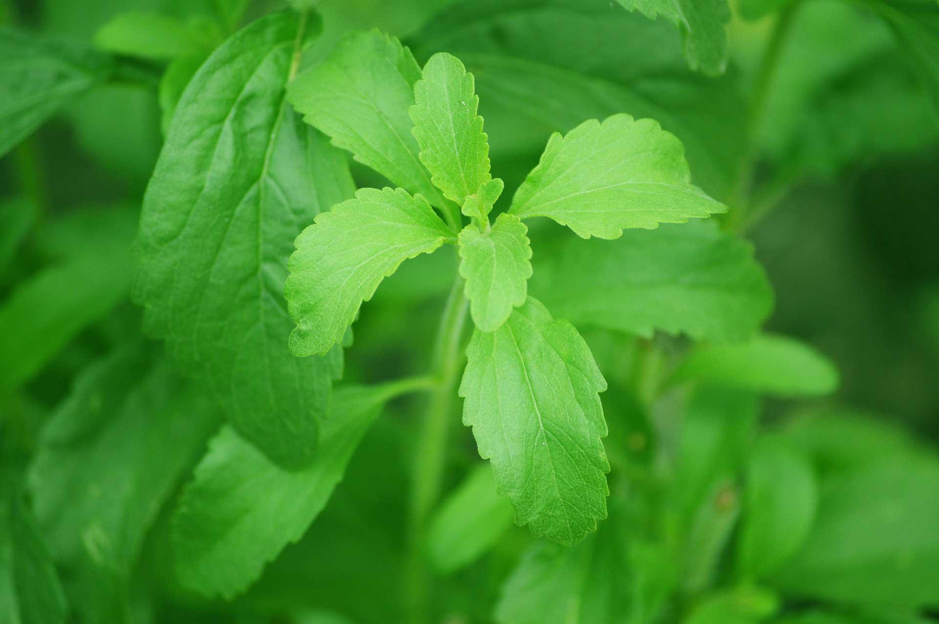 ProViva Stevia Steviolglykosider