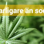 Socker eller Marijuana – vad är farligast?